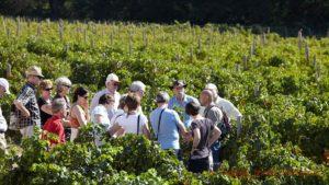 Visiting the a vineyard in Franschhoek, South Africa File name: fc20-8839.jpg Edit | Trash | View | Regenerate Thumbnails